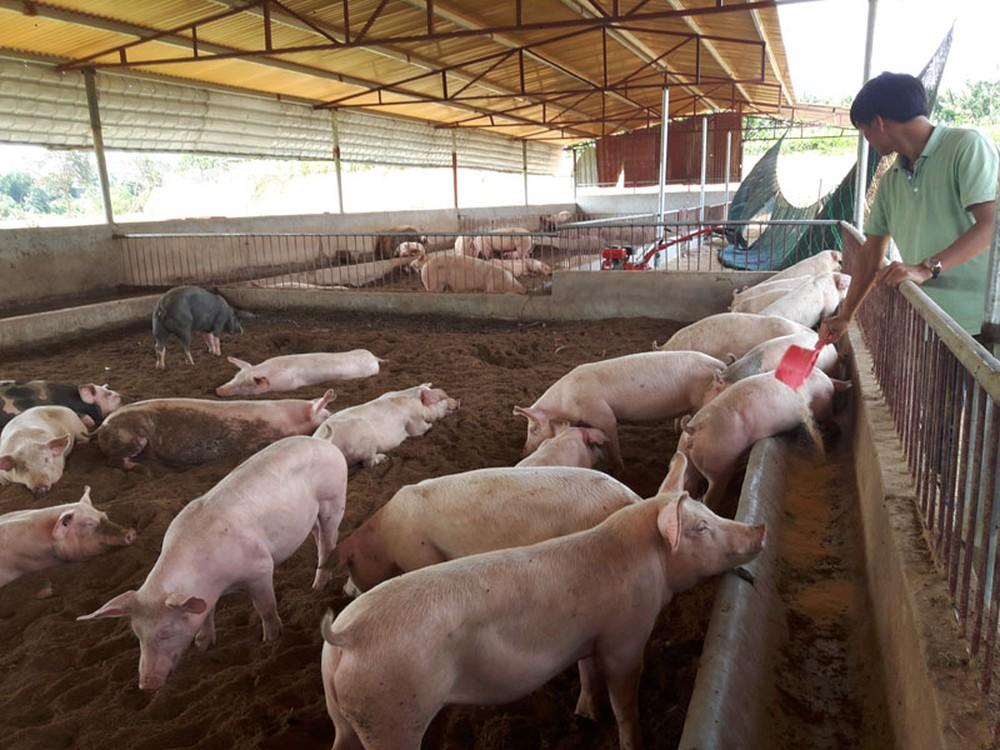 Phát triển theo mô hình kinh tế trang trại sẽ làm thay đổi bộ mặt của ngành chăn nuôi.
