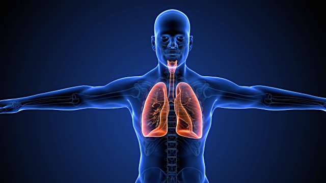 phổi nằm ở đâu