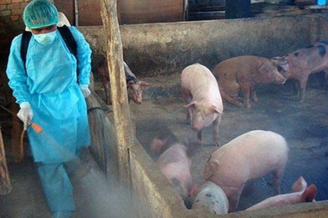 phòng dịch tả lợn châu phi